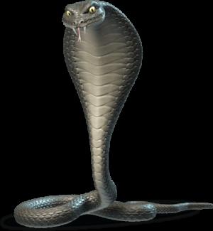 kaboo snake